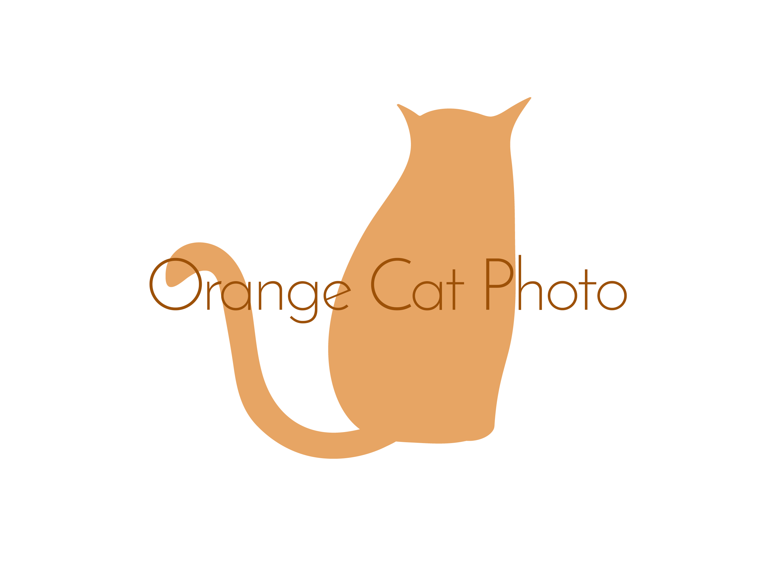 Orange Cat Photo | Wedding Photography